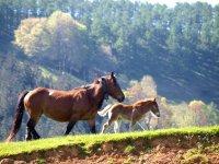 Cavalli tranquilli