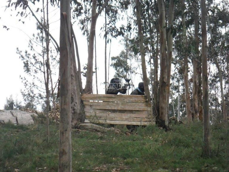 Barricade among trees to paintball in Zapateira