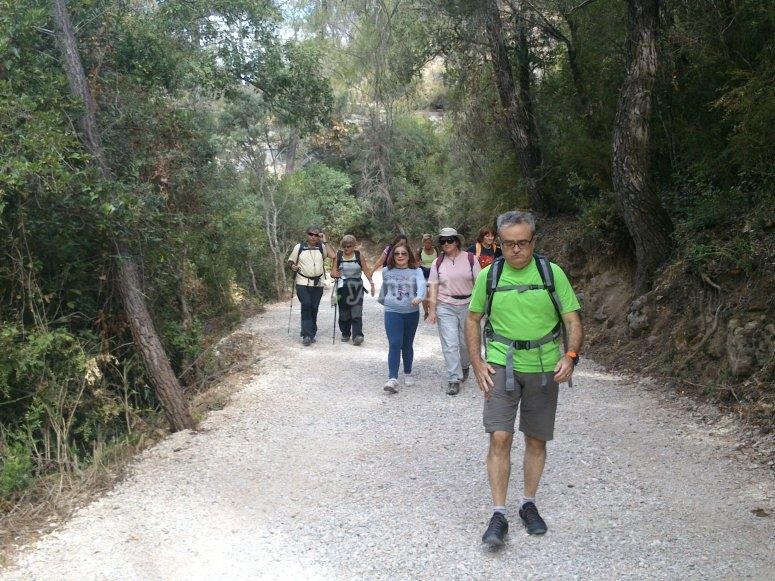 Caminando por la Sierra