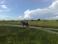 1h horse ride tour in Madrid