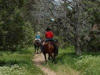 标志穿过树林骑在马背上