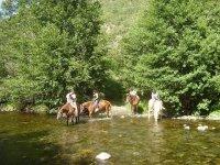 过河马穿越森林骑