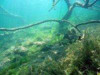 Paysage sous les eaux des lagunes
