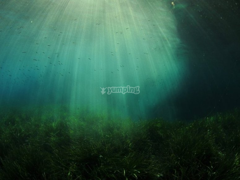 The sun's rays in the depths of the sea