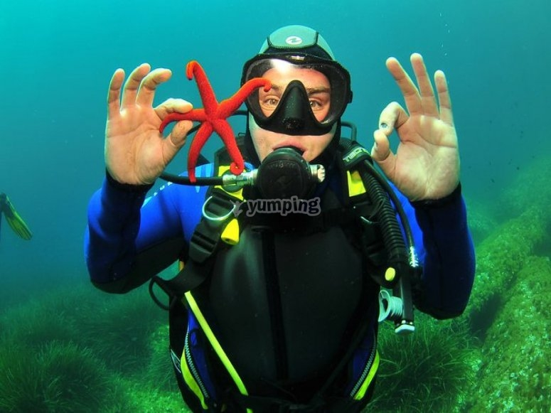 Swimming with a starfish