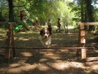 Perro saltando en el campamento