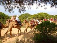 En los caminos de tierra con los camellos