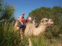Entre los árboles con los camellos