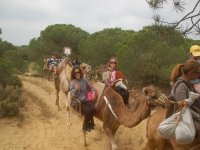 Sobre los camellos en ruta