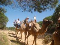 Compañeros de trabajo en el camello