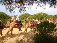 rutas en camello