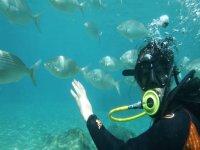 学生与鱼潜水
