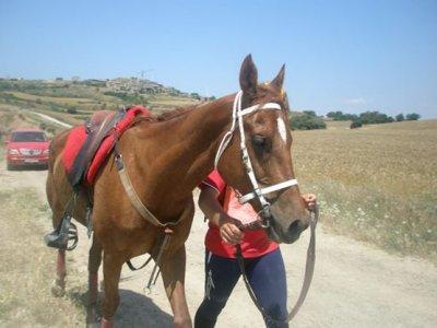 Ruta a caballo por Sierra de Moncayo y alojamiento