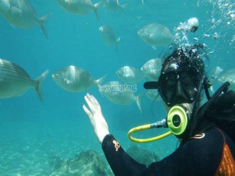 学生在海中潜水与鱼