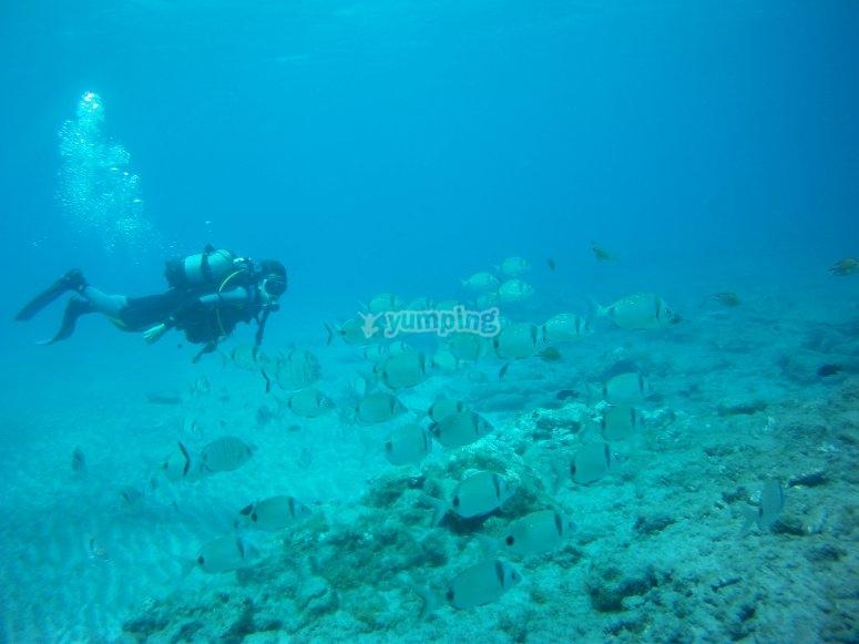 En la inmersión