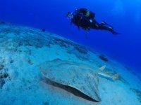 沉浸在大加那利岛的海岸标题