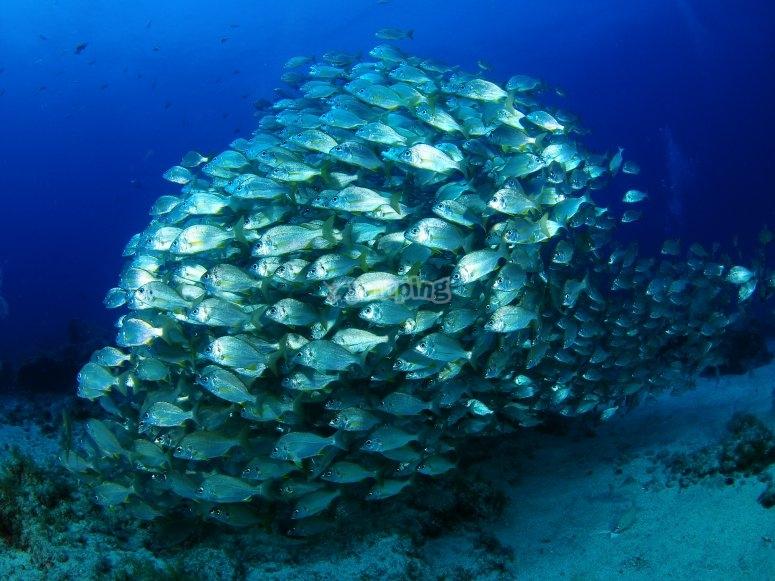 Multitud de peces
