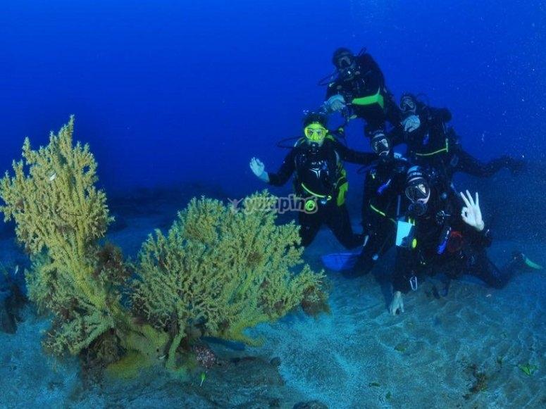 Inmersión en Arinaga