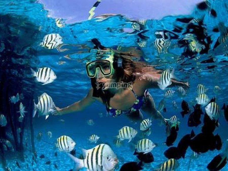 Peces en el fondo de Gran Canarias