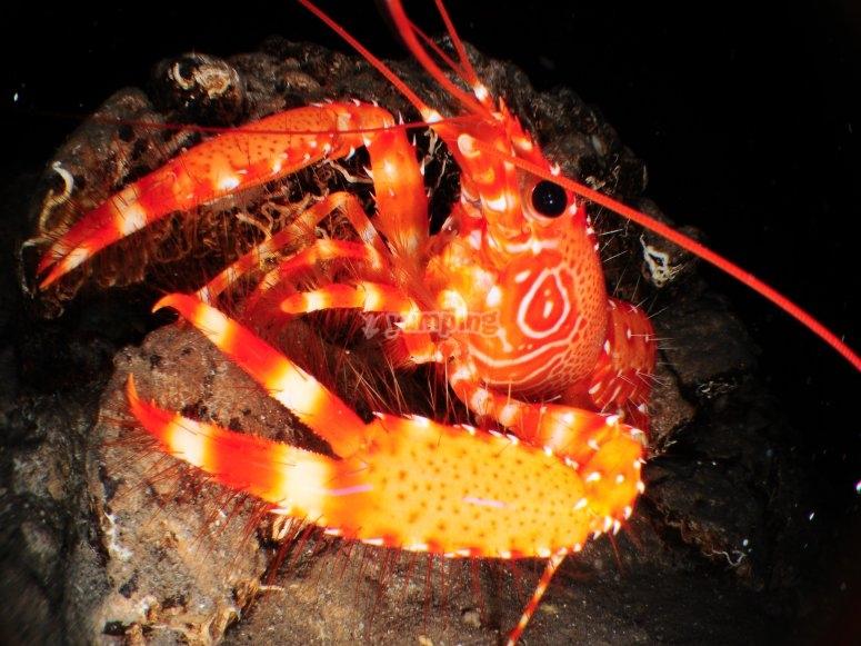 Fauna marina de la isla
