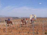Ruta a caballo junto a las bodegas