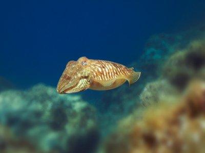 梅诺卡海洋保护区北部的潜水洗礼
