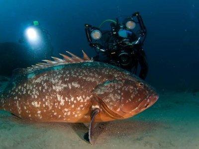 PADI高级开放水域潜水员,Puerto Del Carmen