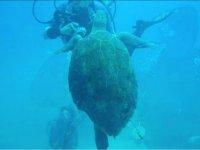 海洋动物和潜水员