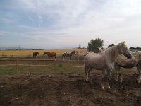 Rutas a caballo en Osona