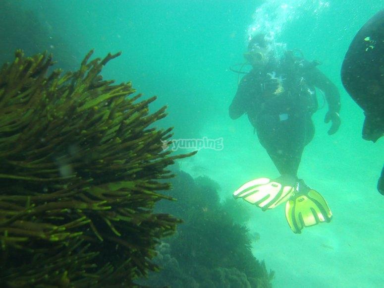 潜水员rias gallegas
