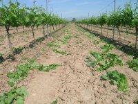 Visita los viñedos