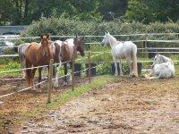 Diferentes caballos segun alumno