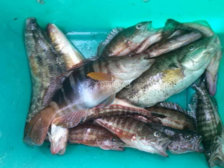 Resultado de la jornada de pesca