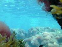 Ruta de snorkelling en la costa de Ibiza, 4 horas