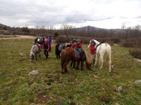 Excursion con caballos y ponis