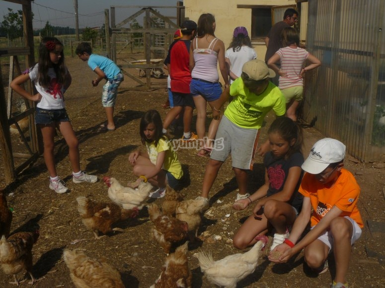 Watching the farm school