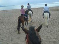 与马匹一起出没海滩