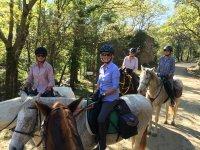 有马在格拉纳达的马路上