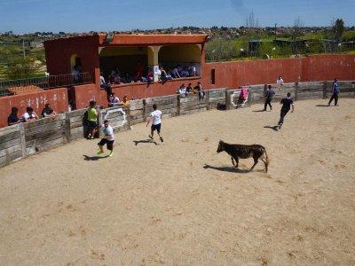 OFERTÓN: Capea + Gymkhana + Juegos. Navalcarnero