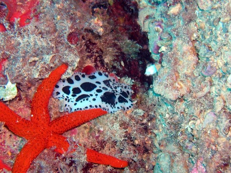 Starfish and cow-like sea slug