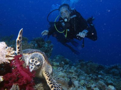 PADI Open Water Madrid在阿利坎特实习