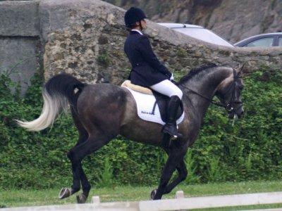 Equus Boria