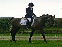 Nivel avanzando de equitación