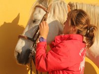 Preparing the horse for the class