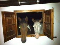 Nuestros caballos estan como en casa