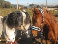 Rutas a caballo en Girona