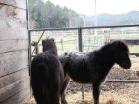 Excursiones a caballo en Girona