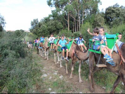 1h Dromedary Route in Noja, Adults Fee