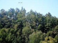 Sopra gli alberi