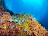 Fondo marino de colores
